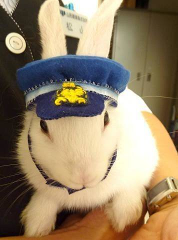 KTR_rabbit_captain