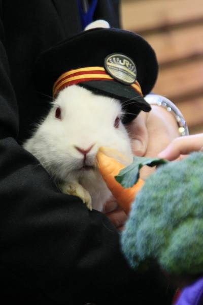 rabbit_carrot_captain