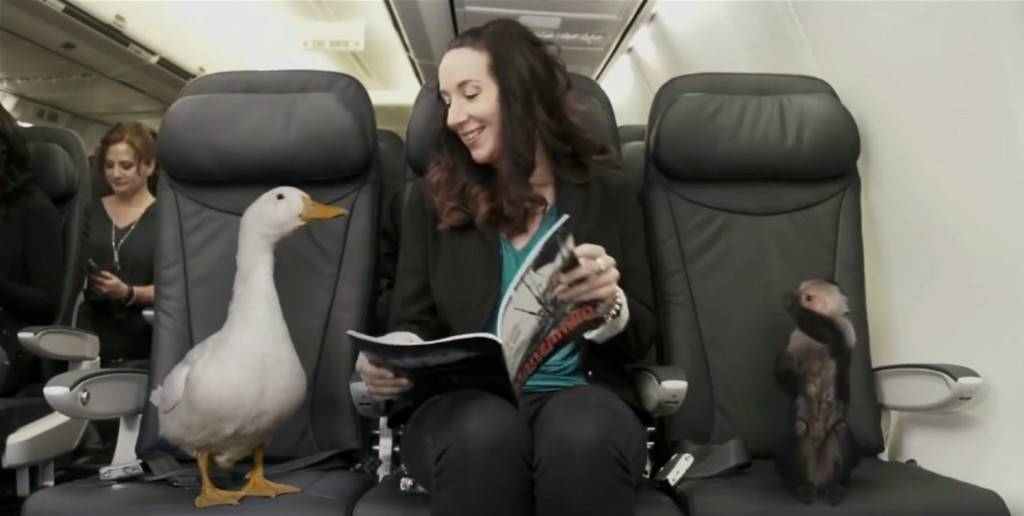 airline_funny_video