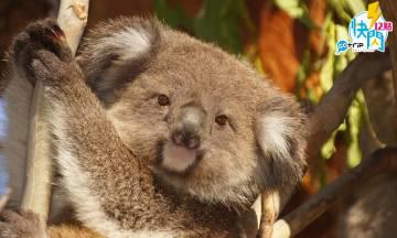 GOtrip快閃12點,維珍澳洲航空, Virgin, 澳洲 , 機票優惠, 旅遊優惠, 機票, 悉尼