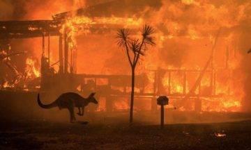 澳洲山火捐款