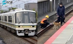 JR西日本, 柴犬, 柴柴, 日本電車, 嵯峨野線, 旅遊新聞, 熱話, 日本