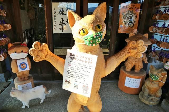 【武漢肺炎】日本貓寺出招防疫 超萌景象引得網民大叫「可愛」