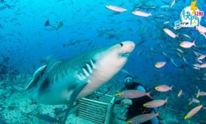 GOtrip快閃12點 ,斐濟 ,斐濟航空 , 機票優惠 , 旅遊優惠 , 機票, 潛水, 蜜月勝地, 鯊魚潛, 泥漿浴, 浮潛, 冷門