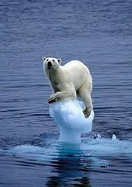 抓着冰塊不放。(圖片來源:Wasteless Future)