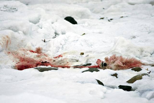 清楚看見小熊的殘骸。