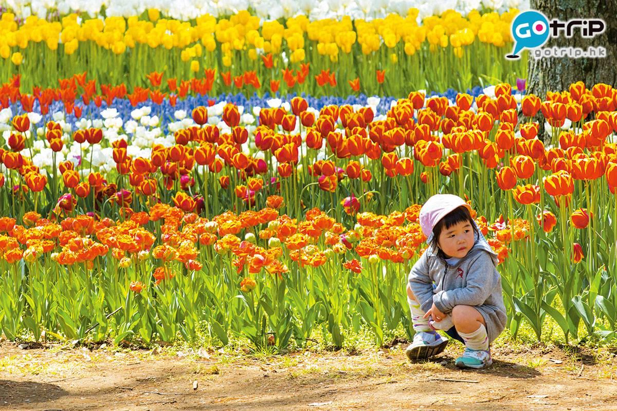 公園內的鬱金香與藍蝶花同期盛開,色彩鮮艷繽紛,龍友們別錯過!