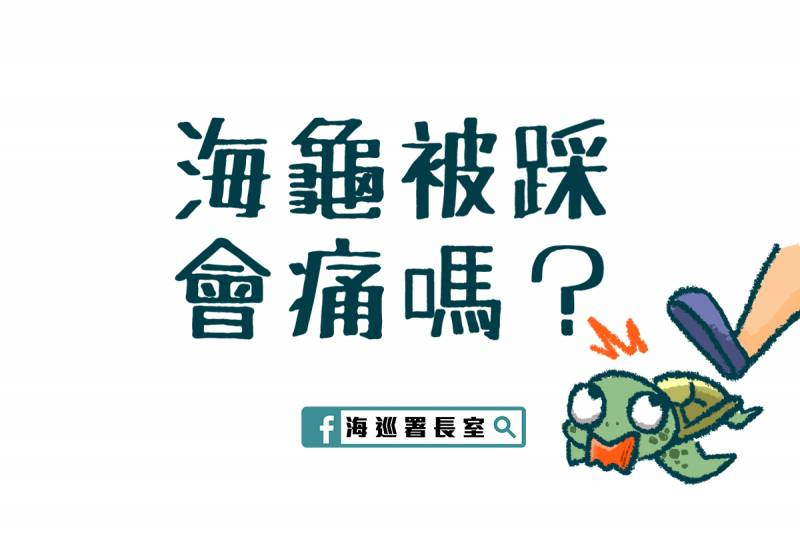 【有片】遊客小琉球浮潛時踩海龜 台灣海巡:欺負海龜,一個都別想跑!
