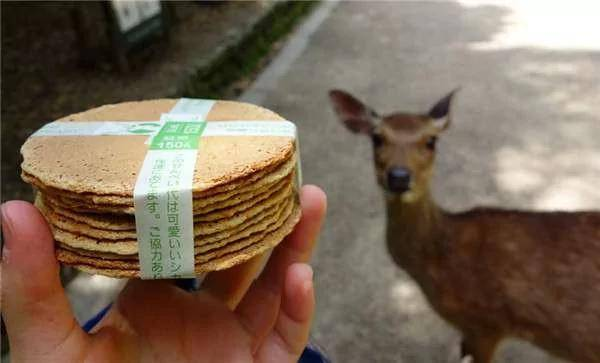 奈良鹿最愛鹿餅。(圖片來源:網上圖片)