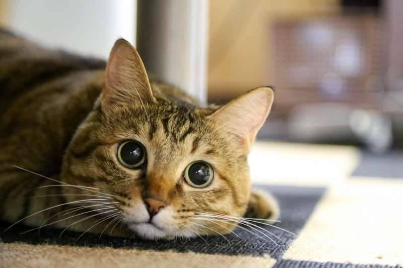 想不到埼玉縣人最疼愛寵物(圖片來源:photo-ac)