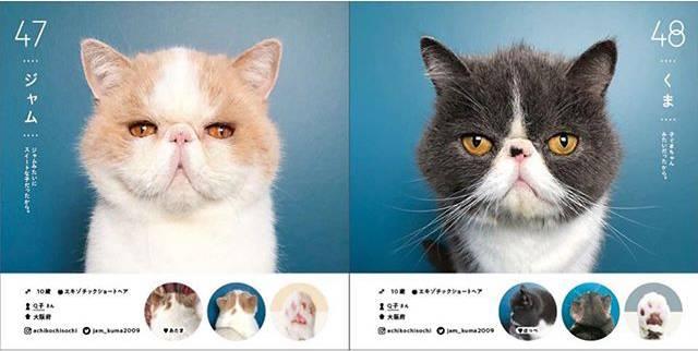 全部都係貓界KOL!日本100隻喵星人圖鑑 收錄鬍鬚+肉球+魅力點