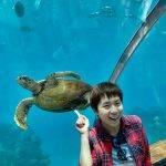 海龜與小斯