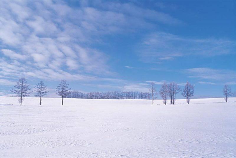 太凍!小強無法生存(圖片來源:網上圖片)