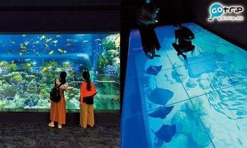 沖繩好去處|沖繩新開水族館DMM Kariyushi!腳下透明水槽超美打卡位