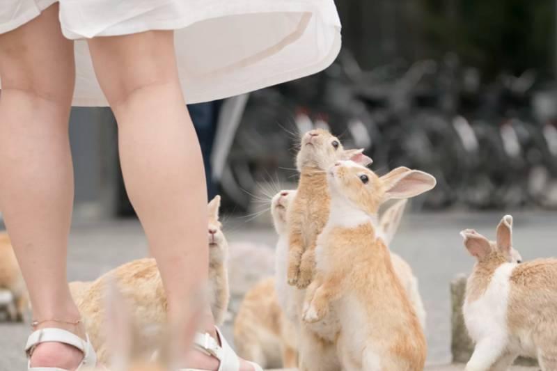 日本最受旅客歡迎都道府縣Top20 東京、京都失落榜首 大阪只排第八!