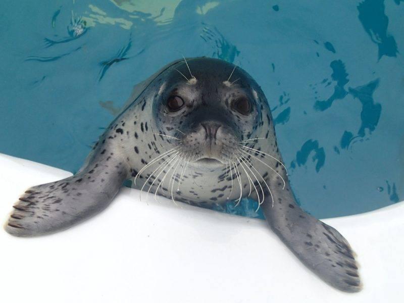 水槽過萬隻水母!全球最大日本水母館 設夜宿水族館體驗