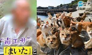 日本貓島連環毒殺案 60隻貓疑被毒死! 80歲犯人:只是想趕走烏鴉