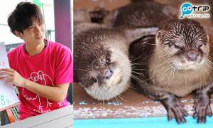 日本水族館推出網絡餵食服務 海獅、水獺外竟然1,000円就能餵食他!