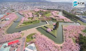 【日本熱話】北海道居民的身分認同問題 填寫居住地址內心充滿違和感
