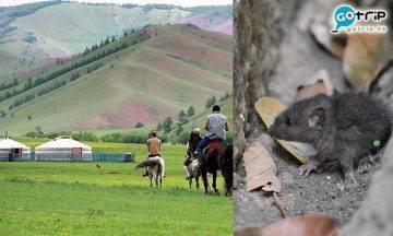 鼠疫, 中國, 內地, 內蒙古