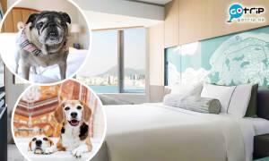 【GOtrip快閃12點】北角Hyatt香港維港凱悅尚萃酒店 人均$500帶狗狗入住