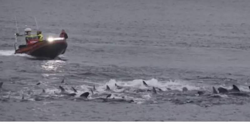用船艇趕他們入海灣。(圖片來源:Sea Shepherd)