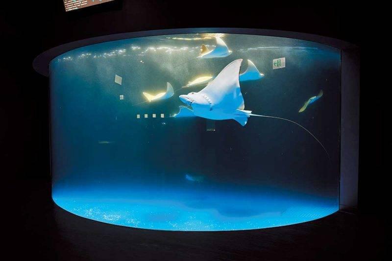 台北好去處|日系水族館首登台灣 佔地1萬5平方米 超美治癒設計