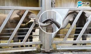 德國動物園感人一幕!大象母女相隔12年重逢秒相認
