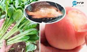 7大買餸網購平台推介 免運費買蔬菜/水果/海鮮 在家輕鬆等送貨