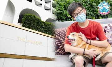 編輯實試THE MURRAY美利酒店住宿 帶寵物STAYCATION好唔好住?|酒店入住報告