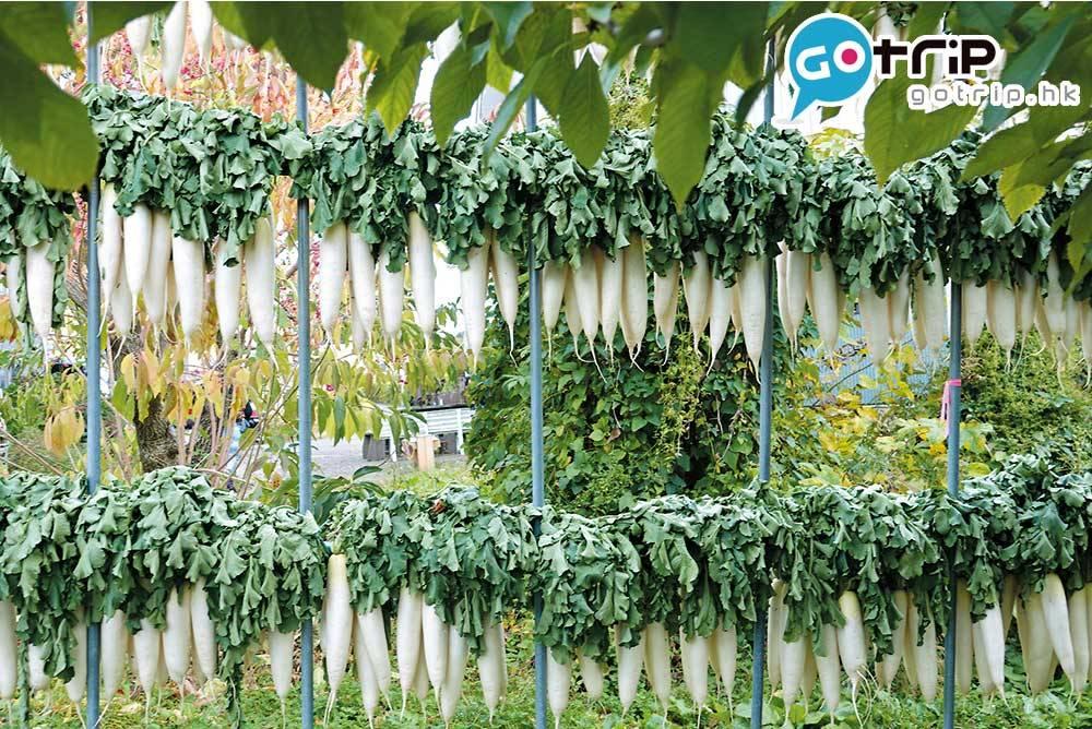 蘋果成熟時正值深秋季節,也要準備過冬 了,一排排的風乾蘿蔔等待醃製過冬。