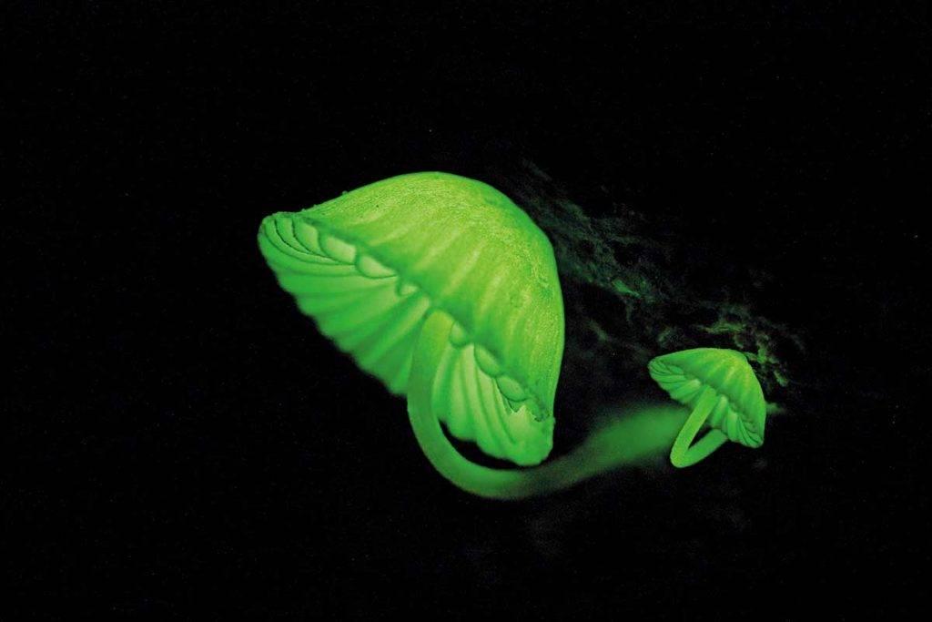 夏季夜探溪谷, 幸運的話,除了可 看到螢火蟲外,還有 機會見識到夜光蘑菇。