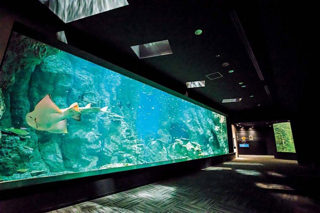「龍串灣大水槽」巨型魚缸展示了當地獨有的生態環境及海洋奇觀。