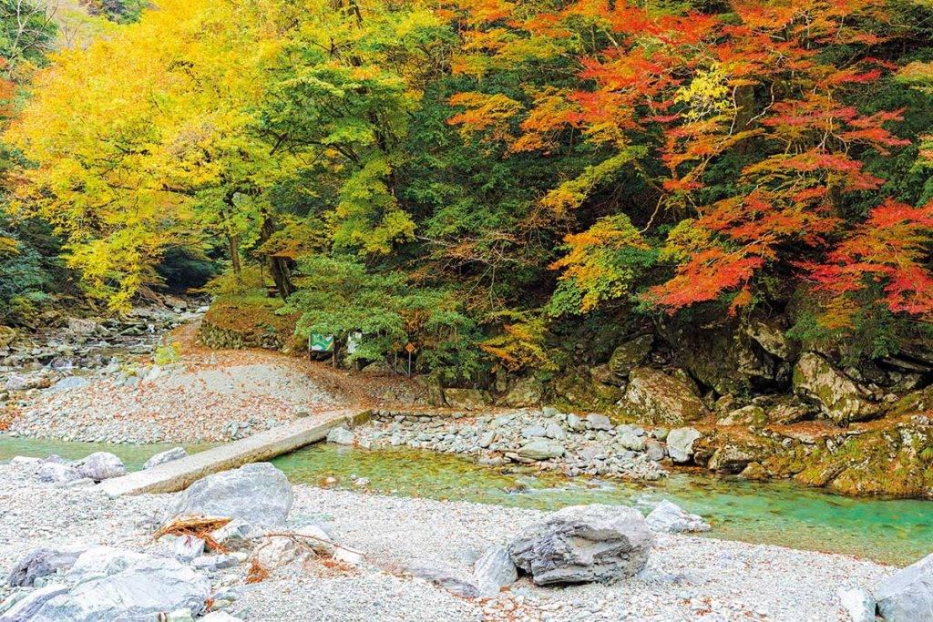 入秋可到安居溪谷及中津溪谷看盡滿山深淺 不一的紅葉。
