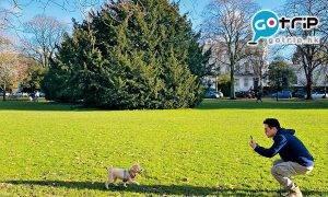 寵物移民|帶寵物移民比想像中容易?港人帶愛犬移民英國5大心得