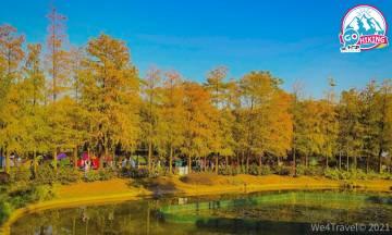 【青衣公園紅葉】落羽松開始變紅 市區都看到!歐陸式建築風格庭院