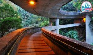 動植物公園旁的攝影秘景!森林裡的空中隧道|己連拿利路線+打卡靚位