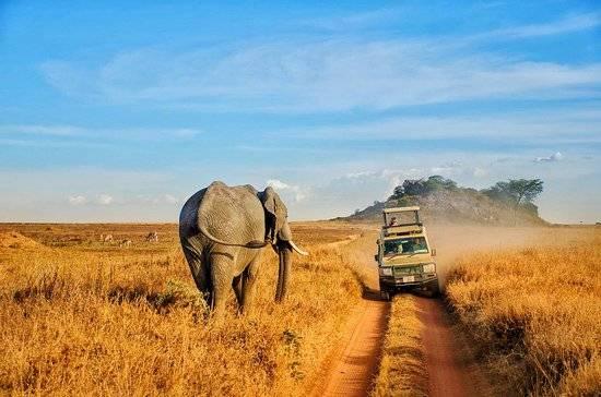 【全世界最佳國家公園】1.坦桑尼亞 塞倫蓋蒂國家公園