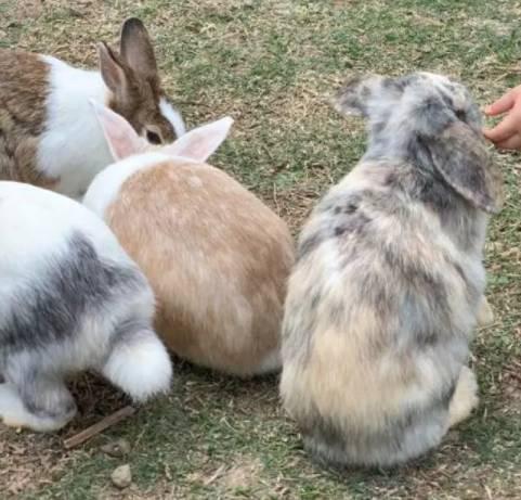小白兔農莊Bunny Wonderland(圖片來源:kkday)
