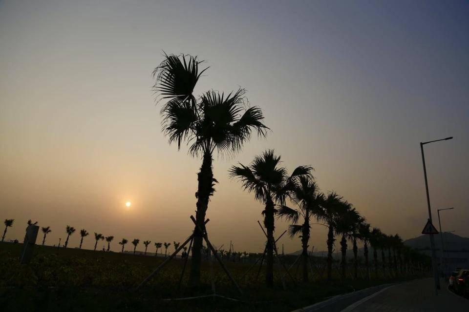 海天一色,加上棕櫚樹所帶來的熱帶風情,十分有美國西岸的感覺