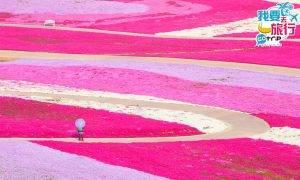 中國賞櫻|走進70萬棵櫻花花海!世界最大櫻花基地+附春日花曆指南