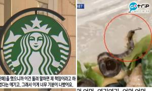 韓國Starbucks沙律上面有蜈蚣 事主嬲爆投訴官方回覆求其