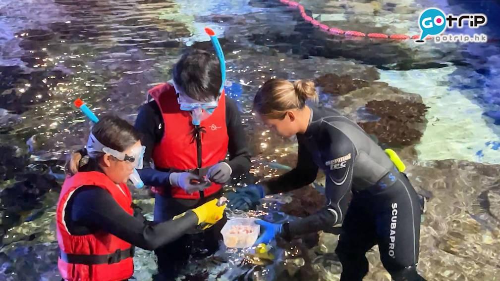 海洋奇觀淺水區域有逾800條、100種海洋生物,職員會為你逐一介紹,一邊玩樂,一邊學習海洋知識。(圖片來源:GOtrip編輯部)