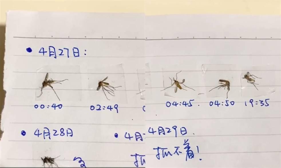單單27號,一晚已經打死左5隻蚊。(圖片來源:微博@長沙政法頻道)