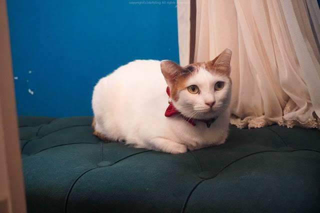 貓貓成員也增添了一位,新貓貓的名字叫白雪。