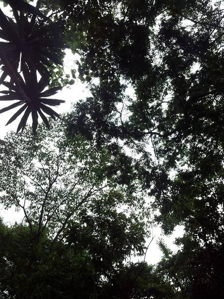 盧旺達 原來有一個熱帶雨林 – 森林之旅@中東空姐