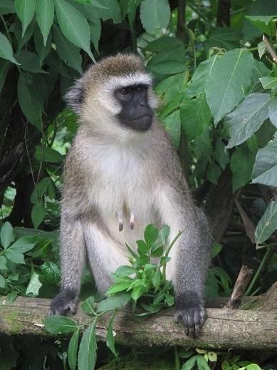 盧旺達 原來有一個熱帶雨林 – 動物之旅@中東空姐